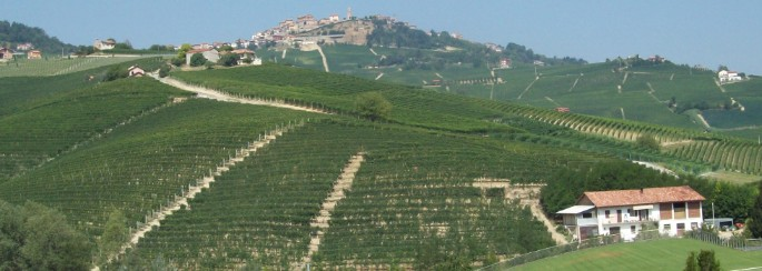 vendita vini on line Barolo Brunate