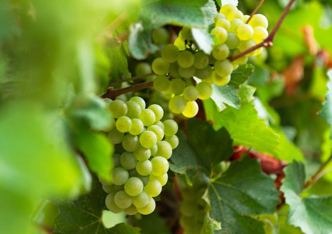 vendita vini on line acidità del vino