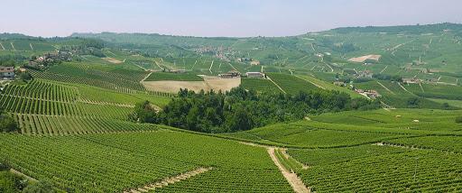 vendita vini on line livia-fontana-vigneti