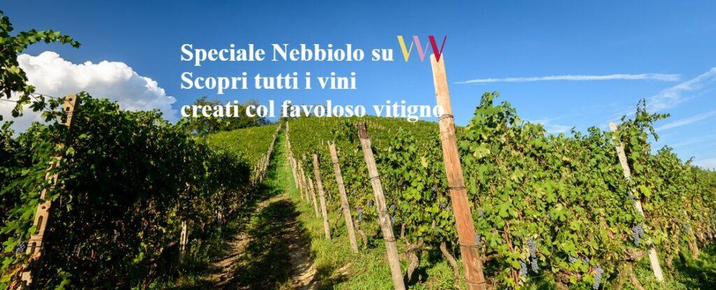 vendita vini on line
